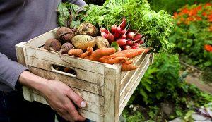 crop plan csa farmer crops