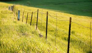 fence posts barbed wire salvage farm