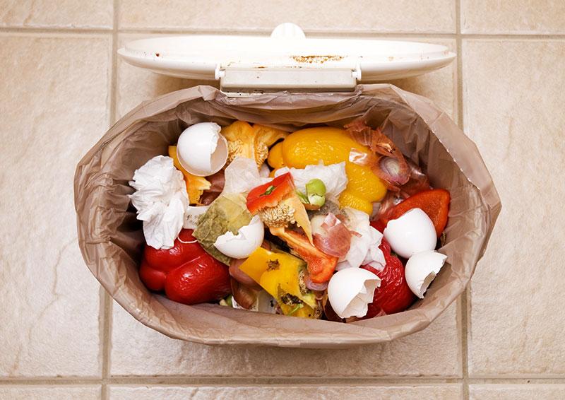 chicken food feed kitchen scraps