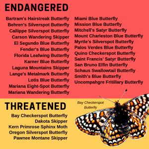 Susan Brackney butterflies caterpillars