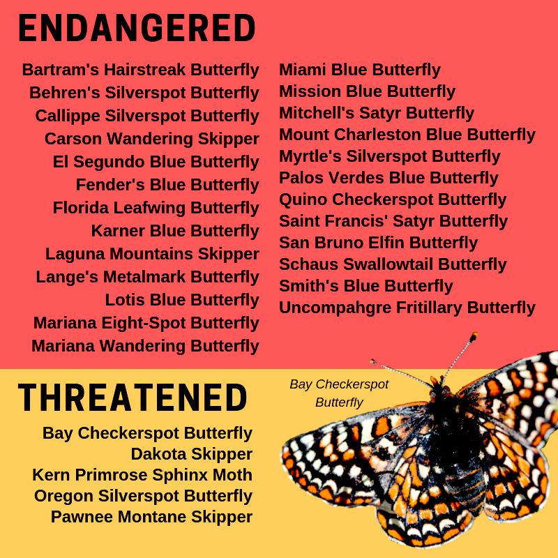 butterflies caterpillars endangered threatened species