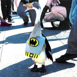 tito the duck titotheducky cosplay