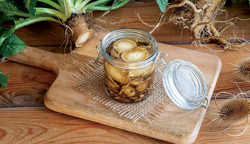 teasel healing herbs pain relief