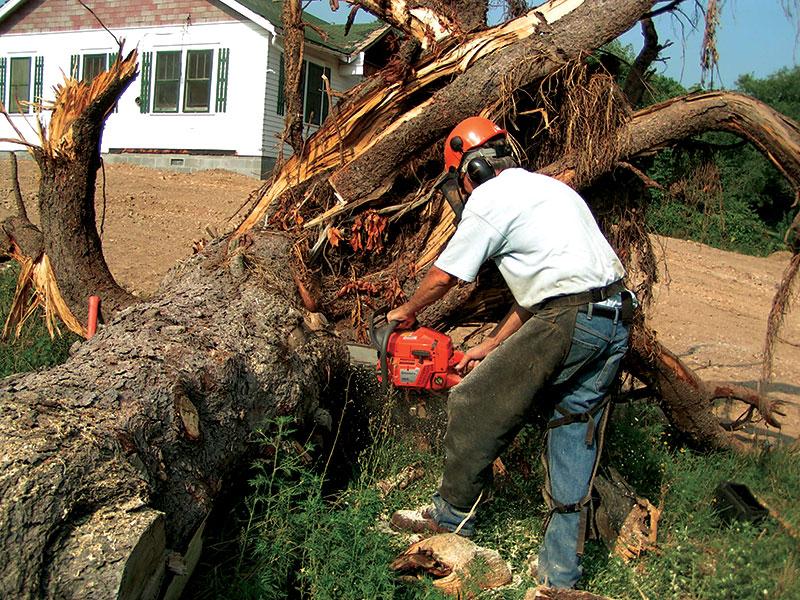 wood tree chainsaw