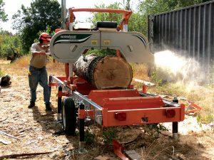 sawmill tree