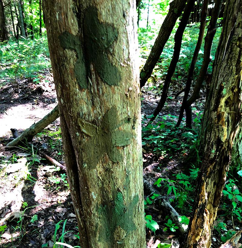 mud paint tree