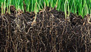 no till tillage crops beds soil roots
