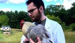 avian veterinarian vet chickens