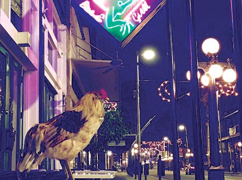 ybor city chickens seventh avenue