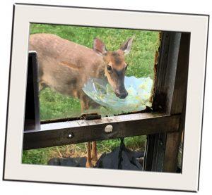 nuisance wild animals deer