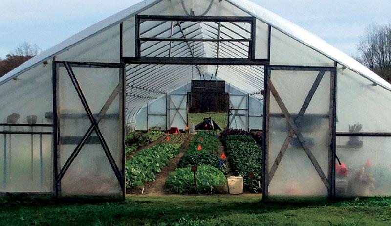 hoop house cover crops