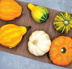 chickens food fall pumpkins squash gourds