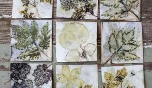 steamed prints of leaves
