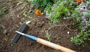 garden chores