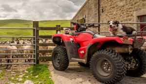ATV and fence