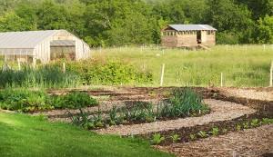no-till garden