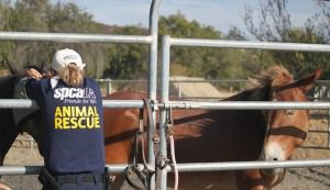 animals rescued from Sand Fire