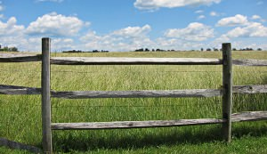 field border