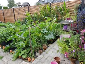 garden grown on plasticulture