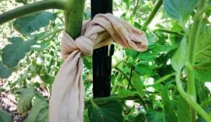 nylon stocking tomato tie
